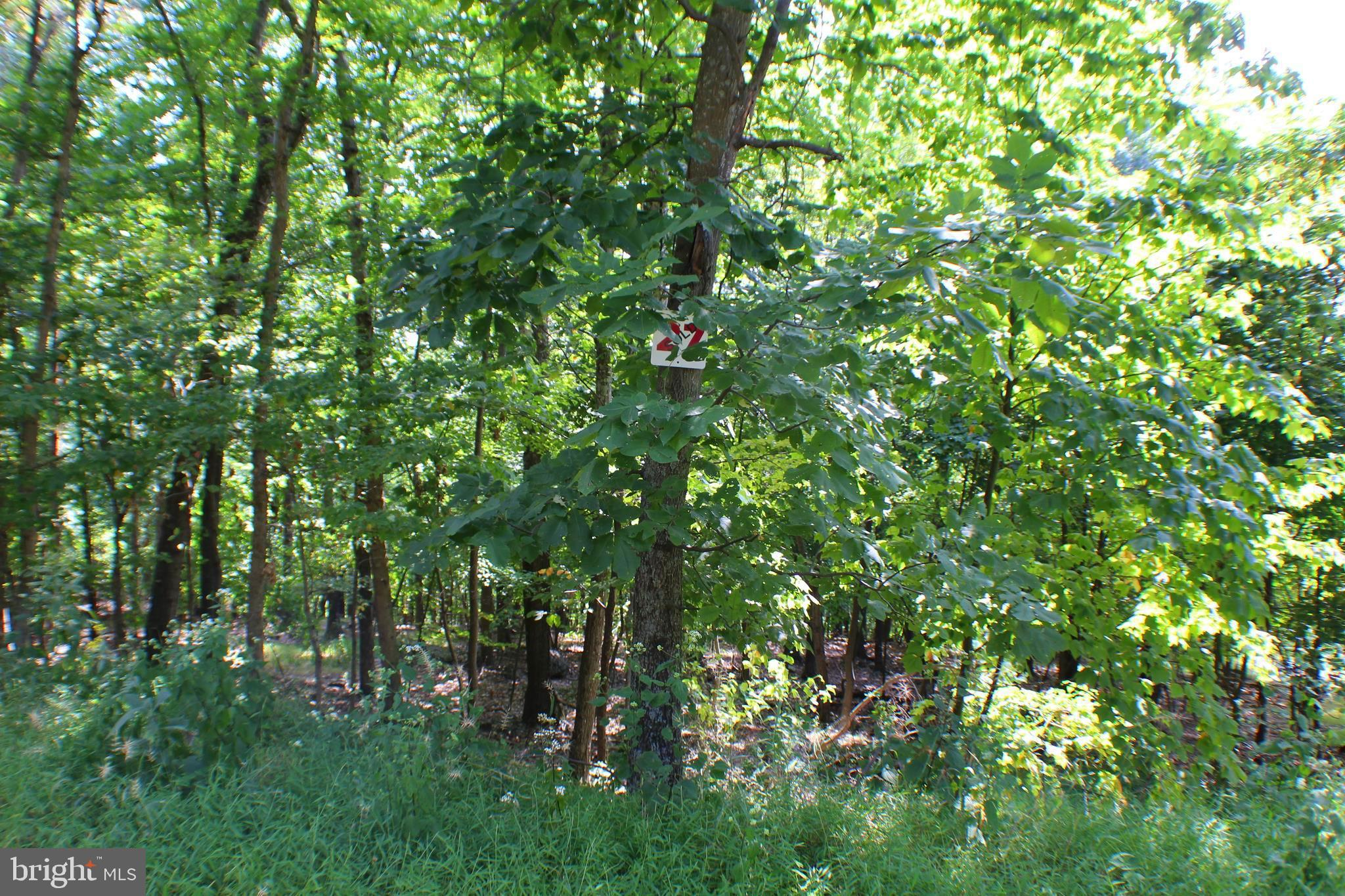 Lot 27 CAVE MOUNTAIN ROAD, UPPER TRACT, WV 26866