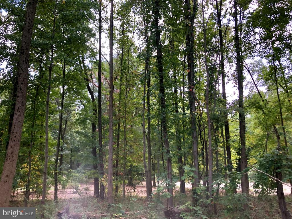 Fantastic Wooded lot/mature trees with 5 bedroomhome/2 bath home, 11.381 acres!  Home needs  TLC, As-Is property, Seller will make no repairs, lot zoned DR-2 Residential, New Home Builders dream!  Many possibilities with this beautiful property for Builders, Investors or Homeownership in a secluded wildlife wooded acreage!!