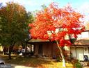 5849 Jacksons Oak Court Ct