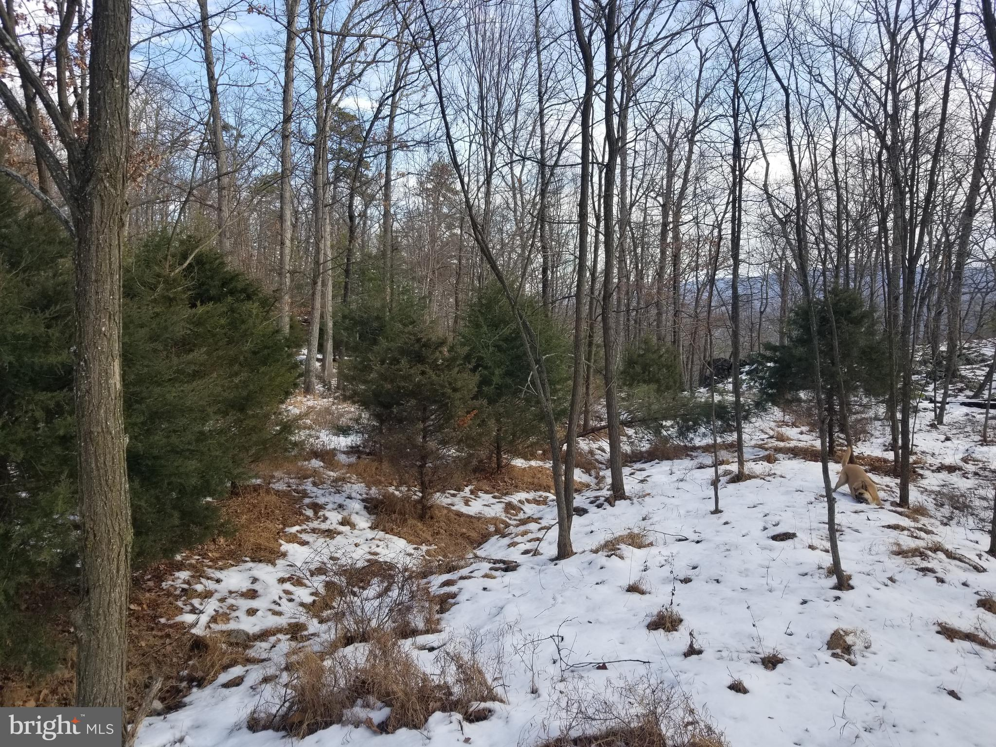 53 LOWER FLATS, YELLOW SPRING, WV 26865